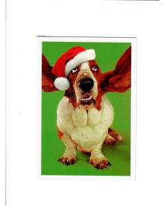 Season's Greetings Card - Dog with Santa Hat