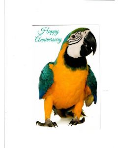 Happy Anniversary Card - From Parrot